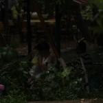 Yuvarlaçay-Haziran2012
